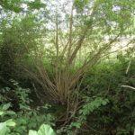 Mättelibach – von der Quelle bis zum Giessen